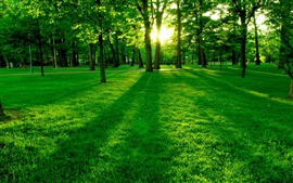 Park the morning sun, the green trees and grass