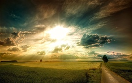 Plains landscape, grass, fields, road, tree, sky clouds, sun rays