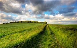 Preview wallpaper Summer fields, green, road, cloudy sky, endless