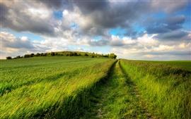 Aperçu fond d'écran Champs d'été, vert, route, ciel nuageux, sans fin