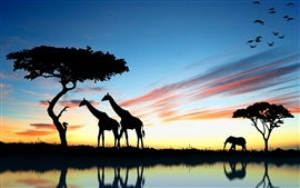 Preview wallpaper Africa giraffe and elephant at sunset, lake reflection