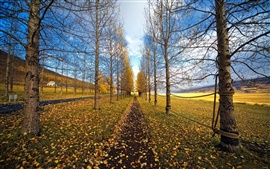 Preview wallpaper Autumn trees road, yellow leaves