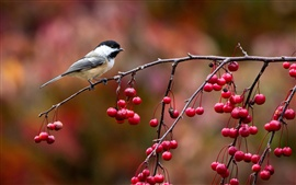 Birds close-up, chickadee, twig and berries, autumn