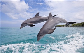Preview wallpaper Bottlenose dolphins, beautiful jumping, Bay Island of Honduras