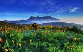 Aperçu fond d'écran Chiang Mai, Thaïlande, Chiang Dao Mountain, sanctuaires de la faune