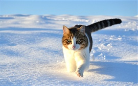 Preview wallpaper Cute cat walking in the snow winter