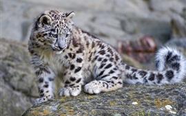 Bonito leopardo da neve do bebê