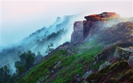 Preview wallpaper Early morning mountain landscape, forest, fog, flowers, grass, stones