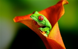 Preview wallpaper Frog with flower