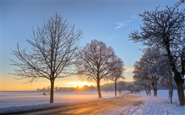 Germany winter snow landscape, road, trees, dawn, sunrise
