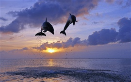 Preview wallpaper Honduras, sea, sunset, bottlenose dolphins