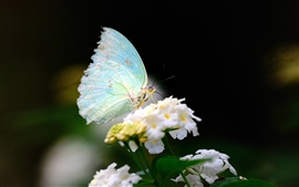 La mariposa de primavera y flores de cerca