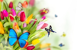 Preview wallpaper Tulip flowers and butterfly