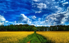 Beautiful scenery, fields, rape flowers, trees, blue sky and white clouds