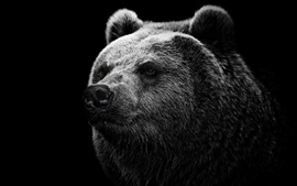 Preview wallpaper Black background black bear