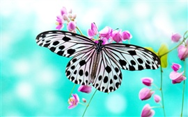 Preview wallpaper Butterfly love purple flowers