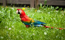 Preview wallpaper Colorful parrot bird in the grass