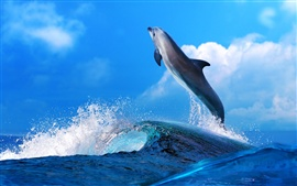Dolphin beautiful dance, sea waves splash