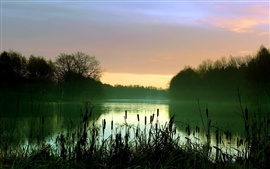 Preview wallpaper Early morning lake scenery, mist, reeds, trees