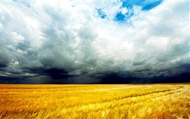 Preview wallpaper Golden wheat fields, clouds sky, storm coming