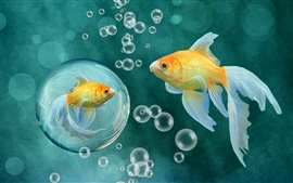 Preview wallpaper Goldfish, bubbles