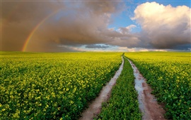 South Africa, fields, wet road, rapeseed flowers, rainbow, sky, clouds