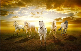 Preview wallpaper White horses in the prairie sunset