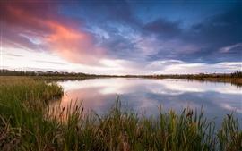 Canadá paisagem, lago, grama, juncos, à noite, céu, nuvens