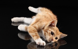 Cute cat, white paws, lying at desktop, reflection, black background
