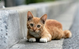 Preview wallpaper Cute kitten lying at roadside