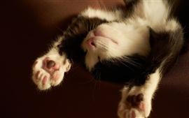 Симпатичный котенок, спать, черный и белый