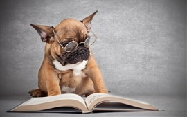 Preview wallpaper Dog wearing glasses reading a book