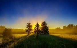 Preview wallpaper Early morning, mist, nature landscape, sunrise, trees