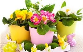 Preview wallpaper Easter flowers, primrose