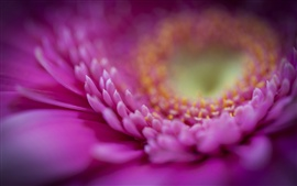 Preview wallpaper Gerbera pink petals macro, blurred background