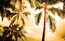 Preview wallpaper Hawaii, hot summer, palm trees