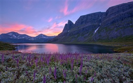 Norway nature scenery, lake, mountains, flowers, sunrise