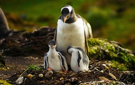 Preview wallpaper Penguin mother and baby penguin