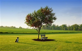 Primavera grama, sol da manhã, cão, banco, árvore, verde