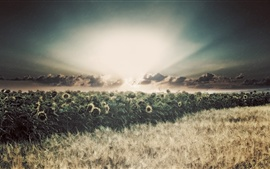 Preview wallpaper Sunflowers, fields, rain, clouds, sun