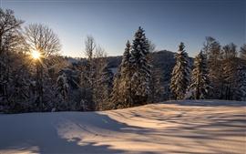 Suíça, Hulftegg, paisagem de inverno, manhã, sol, floresta, neve
