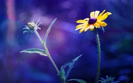 Two flowers, blue blurred background