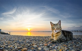 Preview wallpaper Cat at coast sunset