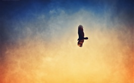 Águila volando en el cielo del atardecer