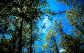 Forest trees, blue sky, plane flying over the forest