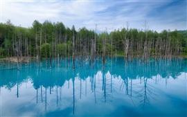 Japão Hokkaido, lagoa azul, reflexão da água, árvores, céu azul