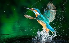 Kingfisher leave lake water