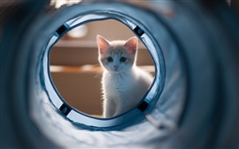 Kitten looking at the pipeline