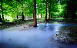 Preview wallpaper Mist nature forest, trees, water