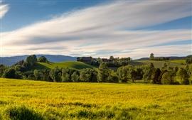 Campos Noruega verano, prado, árboles, colinas, cielo